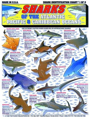 Picture of Fish Identification Charts