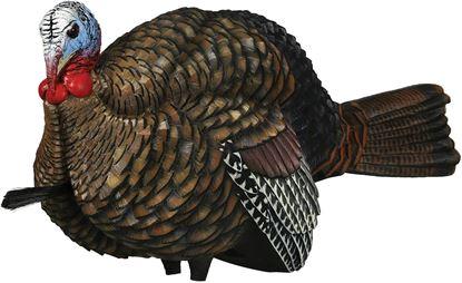 Picture of Avian X 1/2 Strut Jake Turkey Decoy