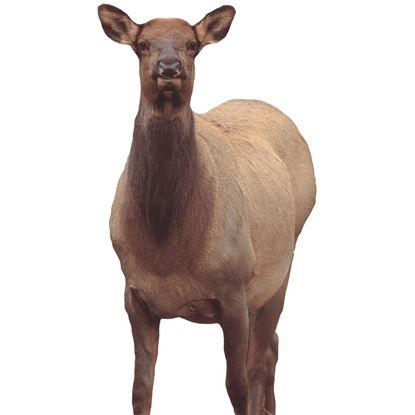 Picture of Montana Decoy Eichler Elk
