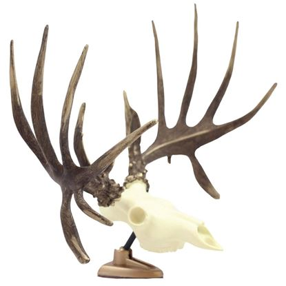 Picture of Big Rack Whitetail RAXX
