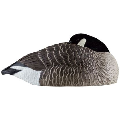Picture of Avian X Canada Sleeper Shells