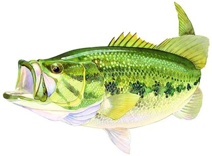 Picture of AFN ST5599 Large Mouth Bass Decal